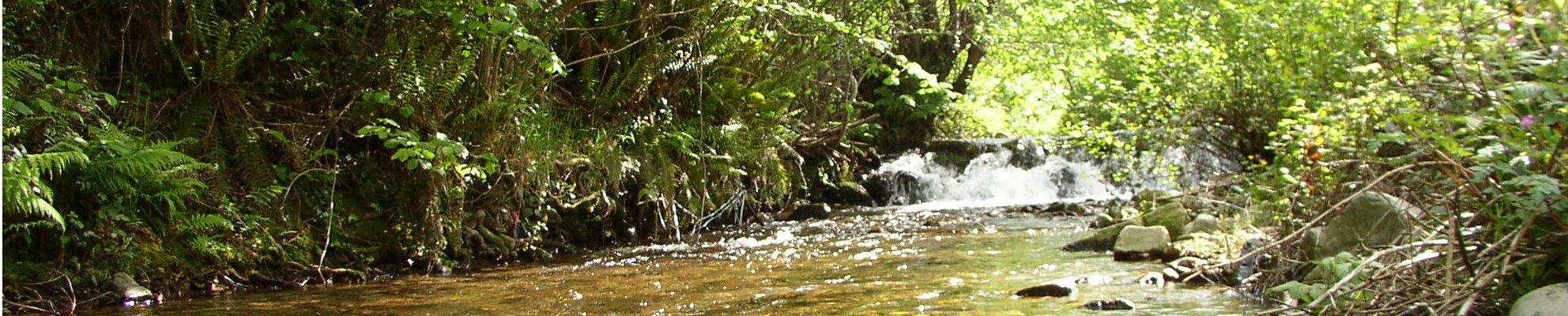 Río Yerbo en Tineo
