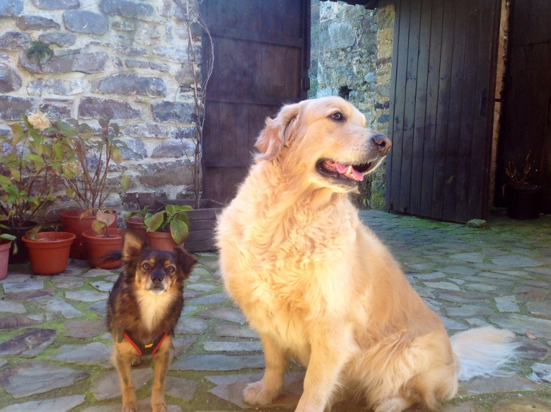 mascotas en el patio
